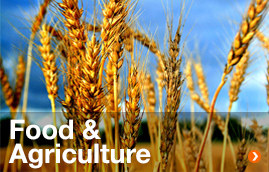 Food&Agriculture
